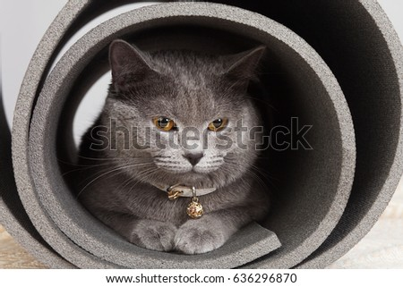 Grey cat sitting in a twisted yoga mat.  #636296870