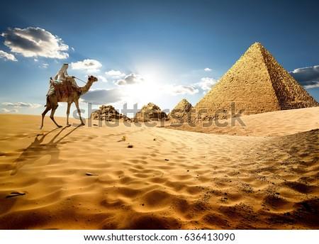 Bedouin on camel near pyramids in desert #636413090