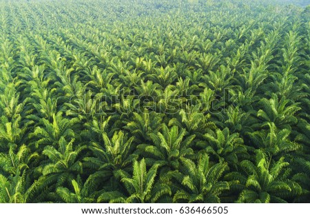 Arial view of palm plantation at east asia. #636466505