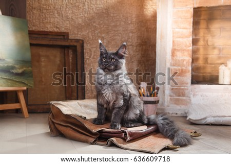 Cat of Maine Coon house, in the interior near the fireplace resting #636609718