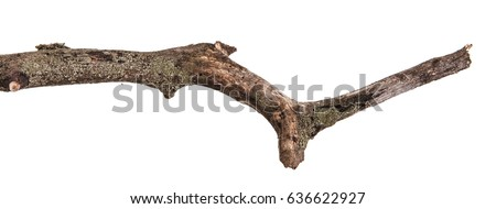 Dry branches with cracked dark bark. Isolated on white background Royalty-Free Stock Photo #636622927