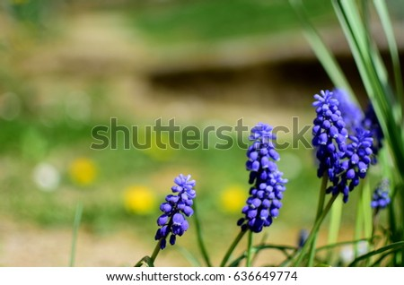 Beautiful blue spring flowers, closeup #636649774