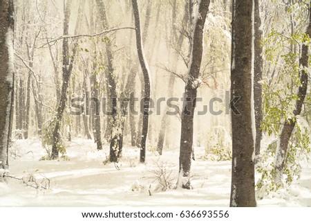 Snowy Day  #636693556