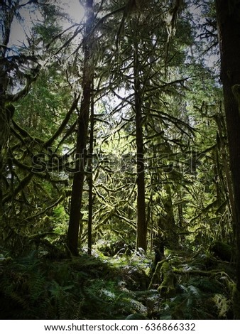 Sunlit forest with moss dripping from trees #636866332