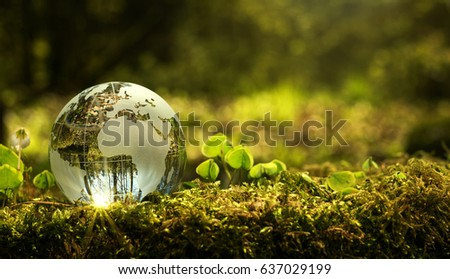 Environment conservation concept. Close up of glass globe in the forest with copy space #637029199