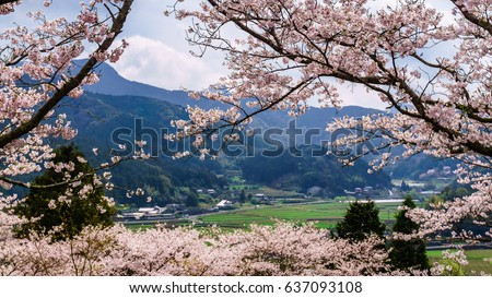 Valley Below Seen Through Cherry Blossom Trees In Japan. #637093108