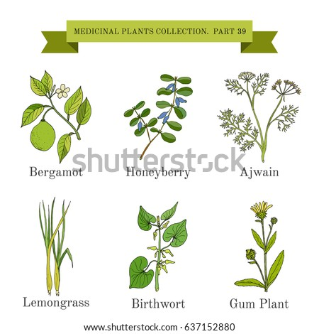 Vintage collection of hand drawn medicinal herbs and plants. Botanical vector illustration #637152880