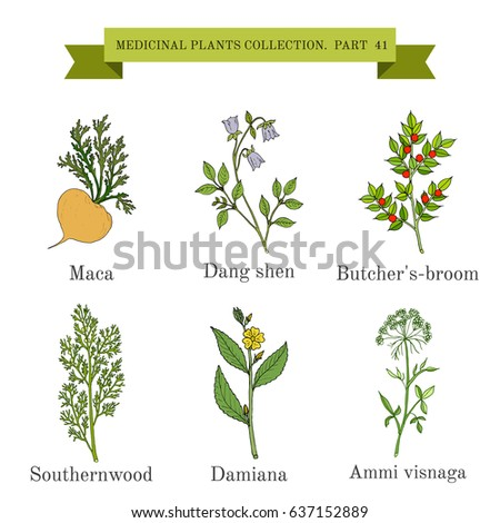 Vintage collection of hand drawn medicinal herbs and plants. Botanical vector illustration #637152889