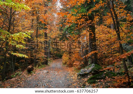 Autumn forest with orange leaves and path. #637706257