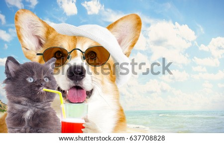 dog And a kitten resting on the sea in summer #637708828