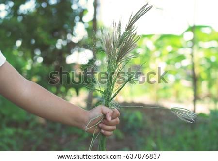 Hand of a little girl holding wild flower blur background                                 #637876837
