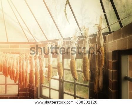 Dried corns #638302120