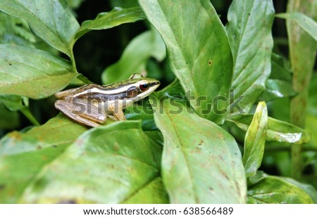 Frog on green leaf #638566489