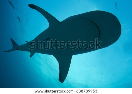 Reef shark silhouette against light blue background