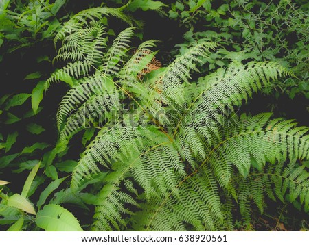 Green fern leaves useful as a background, dreamy faded look #638920561