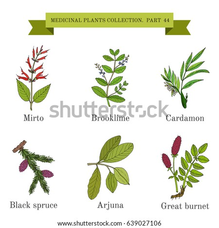 Vintage collection of hand drawn medicinal herbs and plants. Botanical vector illustration #639027106