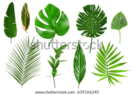 Different tropical leaves on white background #639166240
