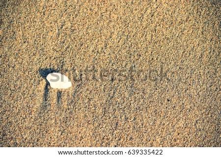 Sandy beach and clam shell #639335422