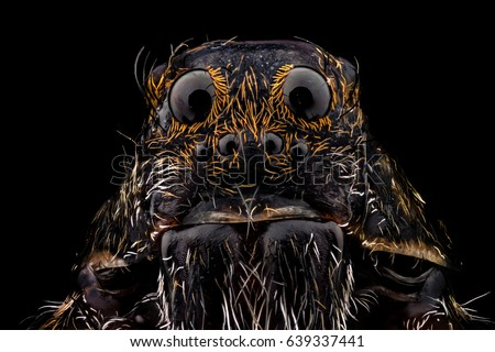 Portrait of a wolf spider magnified 10 times. Real life frame width is 2.2mm. #639337441