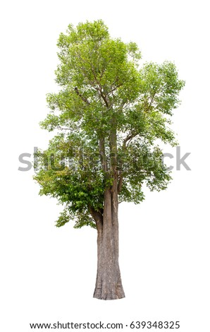 Isolated trees on white background , The collection of trees. #639348325