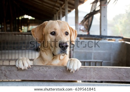 Brown dog stood and wait over the cage background #639561841