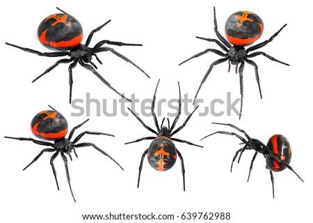 Spider Latrodectus tredecimguttatus, sometimes known as the Mediterranean black widow, the European black widow, or the steppe spider (genus Latrodectus), isolated on a white background #639762988
