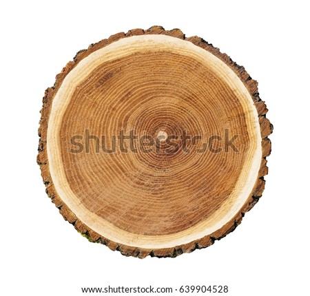 Big tree trunk slice cut from the woods. Textured surface with rings and cracks. Neutral brown background made of hardwood from the forest. Royalty-Free Stock Photo #639904528