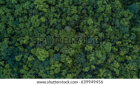 Aerial top view forest tree, Rainforest ecosystem and healthy environment concept and background, Texture of green tree forest view from above. Royalty-Free Stock Photo #639949456