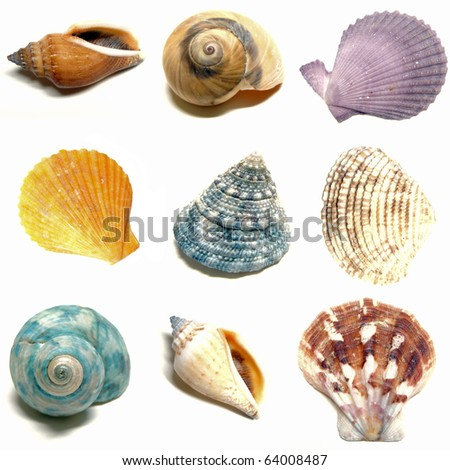 Colorful seashells on a white background #64008487