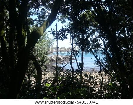 Sea through the trees #640150741