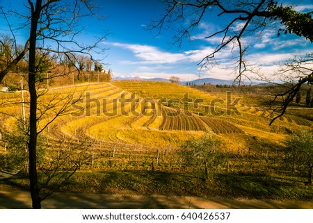 vineyards of italy in early spring in a sunny morning #640426537