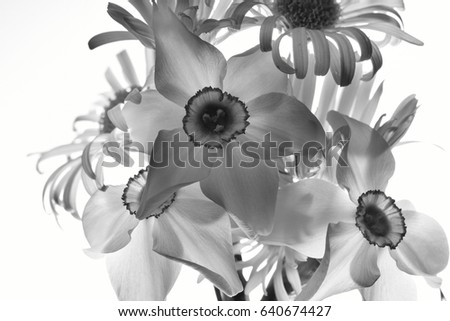 Bouquet of spring flowers in back light, black and white image, transparent.