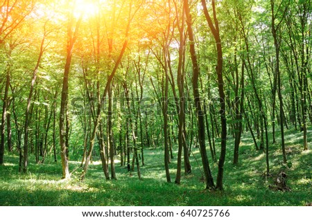 Beautiful wood at the sunset. Environment protection. #640725766