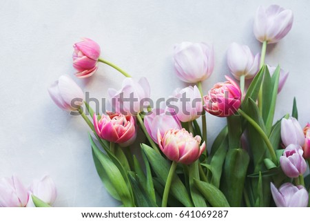 Pink tulips on gray abstract background. #641069287