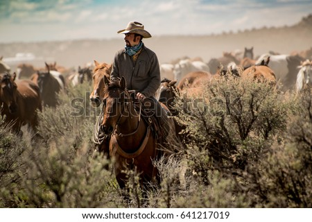 Cowboy leading horse herd through dust and sage brush during horse drive and roundup