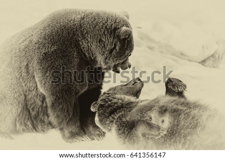 Brown Bears (Ursus arctos) in Lake Clark National Park, Alaska, USA #641356147