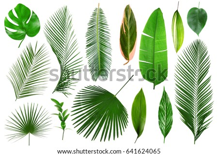 Different tropical leaves on white background #641624065