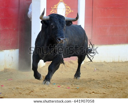 spanish bull #641907058