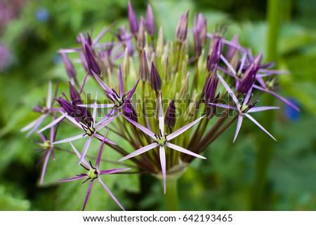 Flower #642193465