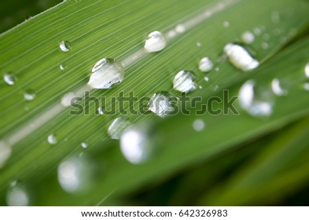 Many Dew Drops on Green Grass after raing.Fresh and relaxation. #642326983