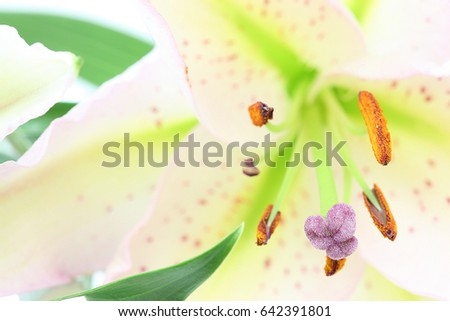 Closeup picture of lily