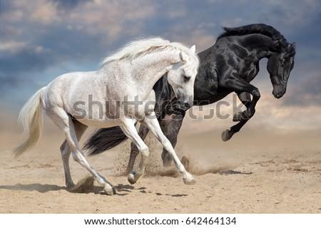 Black and white horses run in desert dust #642464134