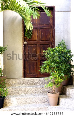 Cozy entrance to the house with a bright wooden door; Granite steps lead to the entrance, they are equipped with flower pots with shrub plants; The palm branch is visible from above #642958789