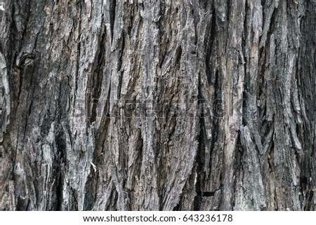 Wood texture #643236178