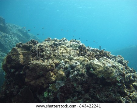 A group of small fish swim above a coral outcropping on a peaceful dive. #643422241
