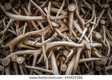Elk Antlers Royalty-Free Stock Photo #643429186