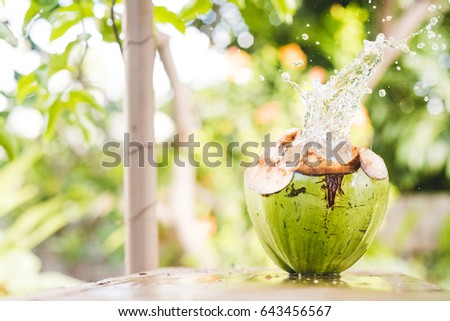 A coconut splash in the a tropical forest #643456567