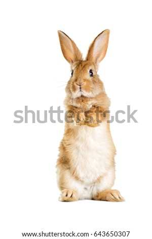 The funny rabbit is standing on its hind legs