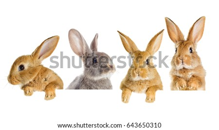 A set of rabbits peeking