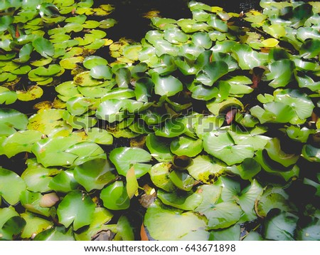 Water lily Nimphaea in a pond, dreamy faded look #643671898